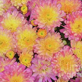 Regina Geoghan - Pink and Yellow Mums