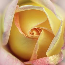 Jaroslaw Blaminsky - Pink and yellow rose