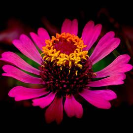 Bliss Of Art - Pink beauty
