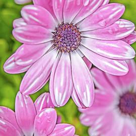 Eleni Mac Synodinos - Pink Beauty