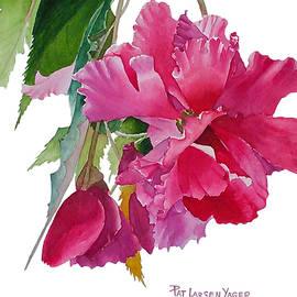 Pat Yager - Pink Begonia