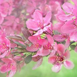 Sheela Ajith - Pink Blossoms