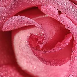 Rachel Cohen - Pink Champagne