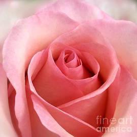 Wonju Hulse - Pink charm