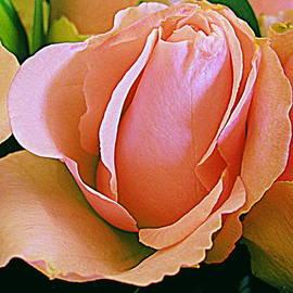 Bonita Brandt - Pink Elegance