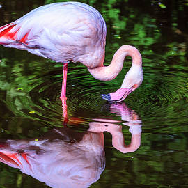 Alexey Stiop - Pink Flamingo