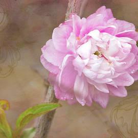 Betty Denise - Dwarf Flowering Almond Romantic Floral