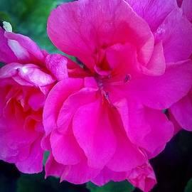 Missy  Brage  - Pink Flowers