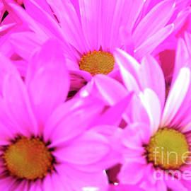 Gardening Perfection - Pink