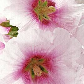 Sarah Loft - Pink Hollyhocks
