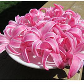 Tina M Wenger - Pink Hyacinths Collage