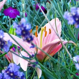Judyann Matthews - Pink Lily In The Lavender