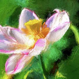 Geraldine Scull - Pink lotus