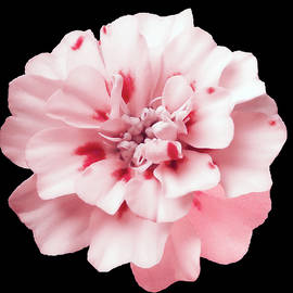 Johanna Hurmerinta - Pink Marigold French Red Brocade