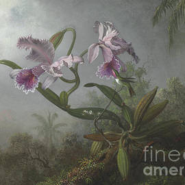 Pink orchids and hummingbird on a twig, 1875 - Martin Johnson Heade