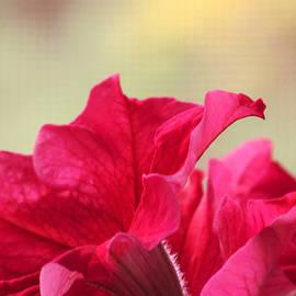 Tammy Garner - Pink Passion Petunia