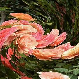 Linda Brody - Pink Peach Rose Swirl