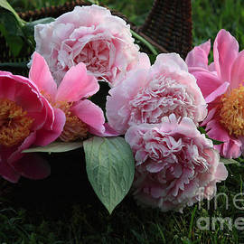 Luv Photography - Pink Peonies Flower In A Basket