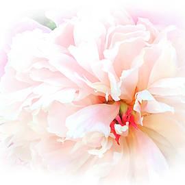 Rayanda Arts - Pink Peony - Macro Floral Digital Painting