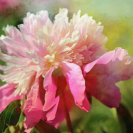 Theresa Campbell - Pink Peony Spring Splash