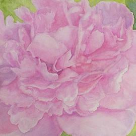 Wendy Jorgensen - Pink Peony