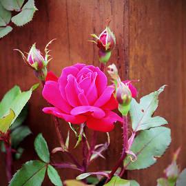 Cynthia Guinn - Pink Perfection