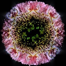 Nancy Pauling - Pink Petalled Roundel
