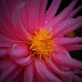 Richard Andrews - Pink Pinwheel
