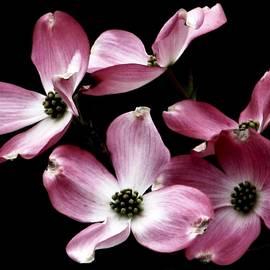 Angela Davies - Pink Pirouette
