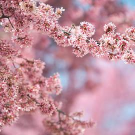 Jenny Rainbow - Pink Quartz and Serenity. Spring in Brno