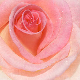 Phyllis Denton - Pink Romance