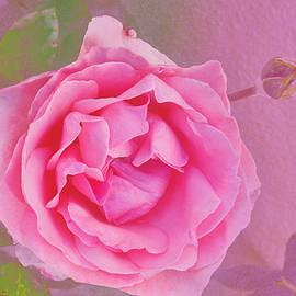 Linda Brody - Pink Rose and Bud Macro 1