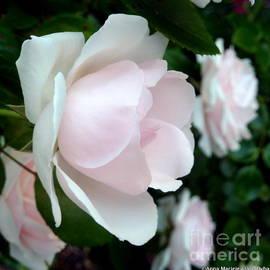 Anna Folkartanna Maciejewska-Dyba - Pink Rose