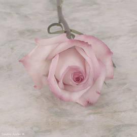 Sandra Foster - Pink Rose Beauty