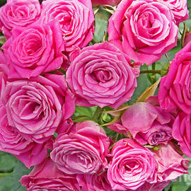 Dawn Gari - Pink Rose Bouquet