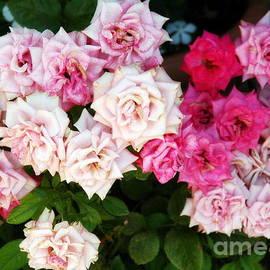 Jane Gatward - Pink Rose Cascade