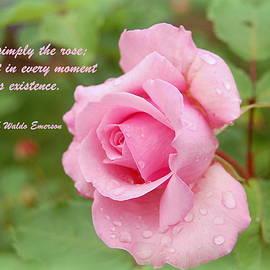 James DeFazio - Pink Rose Emerson Quote