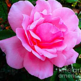 Jasna Dragun - Pink Rose