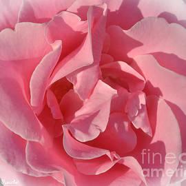 Debby Pueschel - Pink Rose Shadows