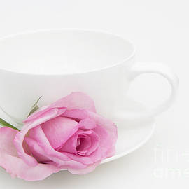 Ann Garrett - Pink Rose with a White Teacup and Saucer