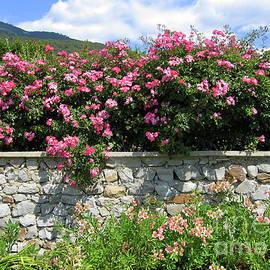 Irina Afonskaya - Pink roses