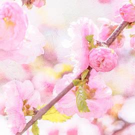 Alexander Senin - Pink Sakura Flowers