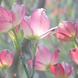 Charlotte Gray - Pink Splendor