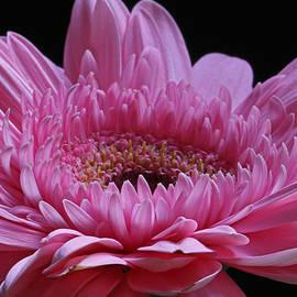 Juergen Roth - Pink Splendor