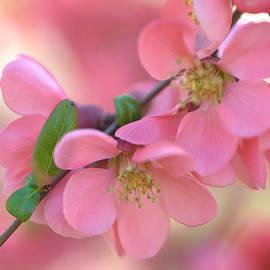 Jenny Rainbow - Pink Spring Marvels