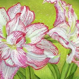 Elizabeth Johnson - Pink Striped Amaryllis