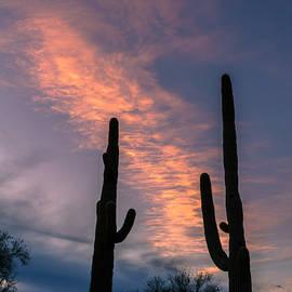 Ed  Cheremet - Pink Sunset