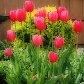 Kay Novy - Pink Tulip Flowers