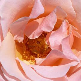 Joseph Skompski - Pittock Mansion Rose
