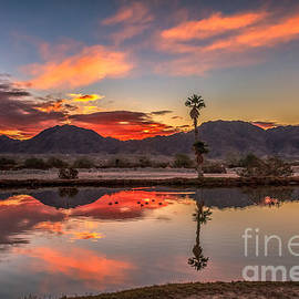 Robert Bales - Plam Tree Reflection